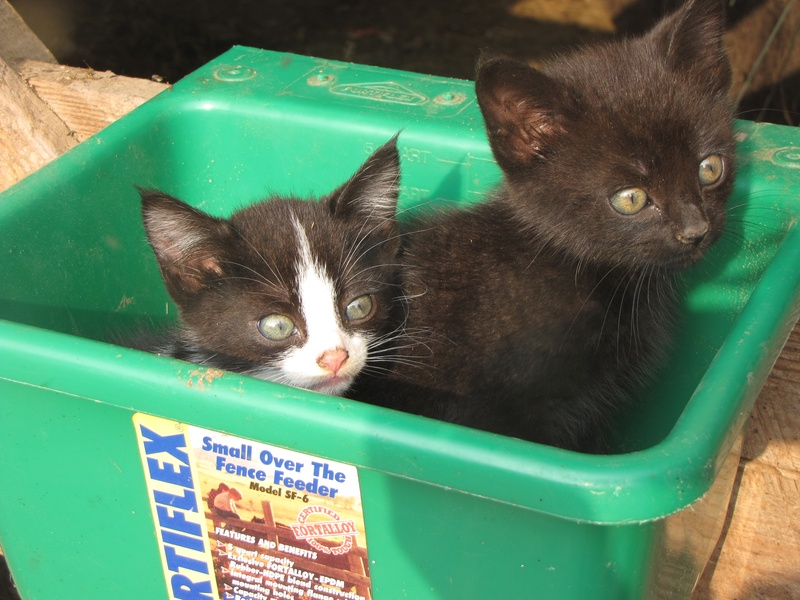 Kittens in a feeder box